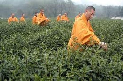 Buddhist and Tea