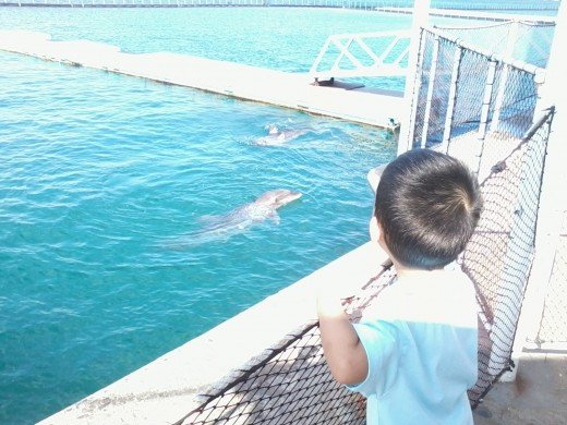 up close with dolphin