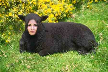 No I Am Not Mutton Dressed As Lamb Honest! foodmarathon.wordpress.com