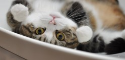 Maru the Cat: In Profile, and in Boxes
