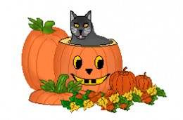 Cute Black Cat And Pumpkins In This Photo