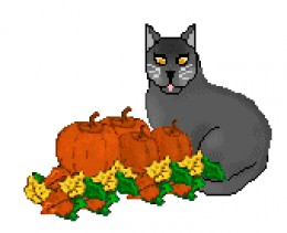 Cut Black Cat And Pumpkins In This Photo