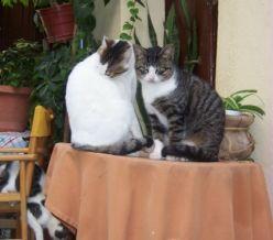 Cretan Cats