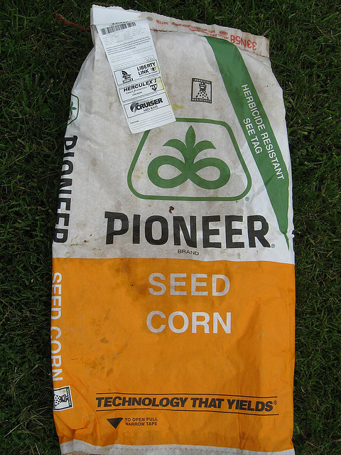 Bag of GMO Corn Seed.