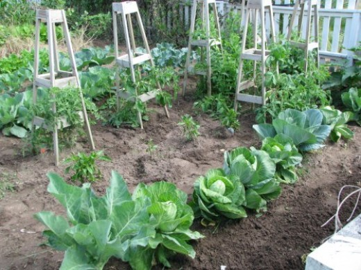 Growing in raised rows