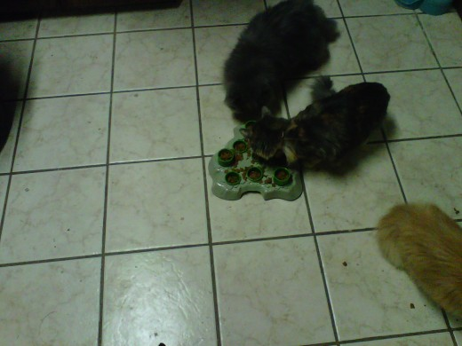 Peter comes in to see what's going on.  Sydney continues to eat.