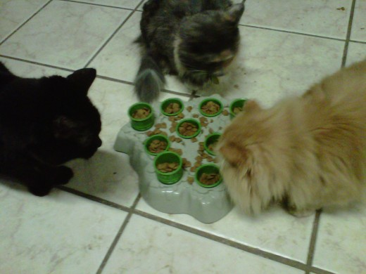 Annabelle, Sydney, and Rose hang out and eat.