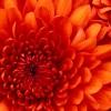 rainwaterfan2 profile image