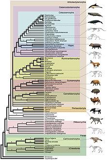 Chart showing Suborder- Mesonychia