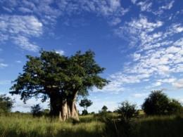 The Savanna of Kruger National Park, South Africa.