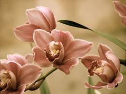Antiqued orchids, Hobart, Australia.