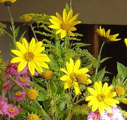 The pretty yellow sunflower-like flowers are excellent for cutting.