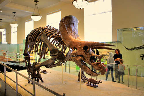 Exhibit at The Museum Of Natural History in New York City