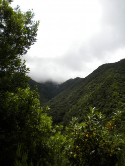 Ecotourism on Madeira