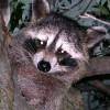 Caveman Etris profile image