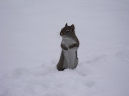 Joe playing hide and seek in the snow