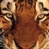welsh jo profile image
