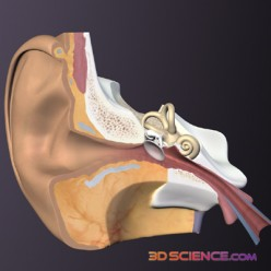 Pictures courtesy of 3DScience.com