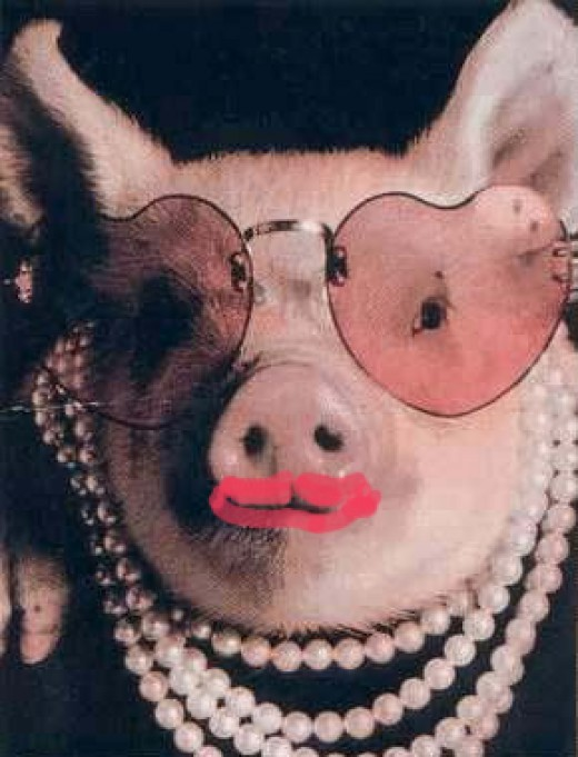 George Bush's Iraq Policy Pig