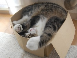A cat playing in a box