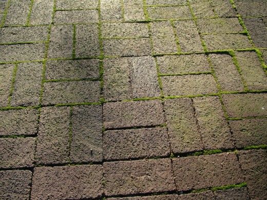Moss grows in between pavers on a patio.