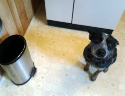 Dog Proof Your Trash Can: How to Keep His Nose Out of the Waste Bin!