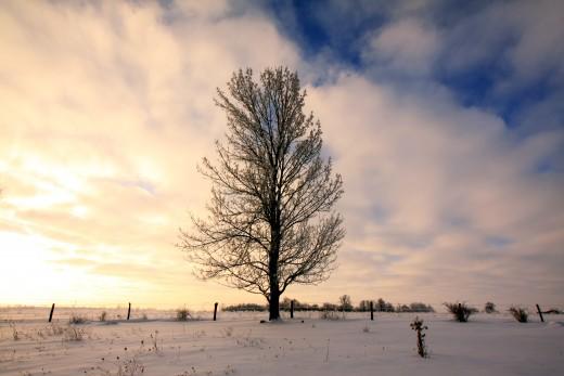 Early Morning Winter, Polk, Ohio