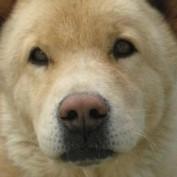 ProMom profile image