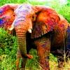 Elephants make the best pets!