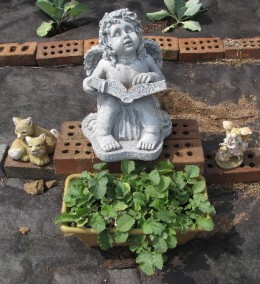 Angel Fred watches over our container garden with radishes that are just about ready to harvest.