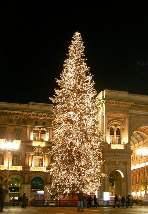In Italy, a beautifully lit tree