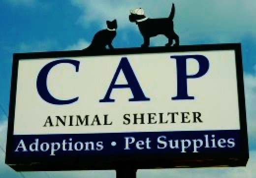 Citizens for Animal Protection charity in Houston, Texas