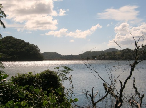 Lake Of Patillas
