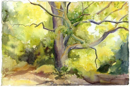 Watercolor I painted of old tree at Forest Park, near the base of Art Hill.