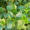GardenExpert999 profile image