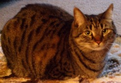 Geri-cat-rics: Aging Cat Issues