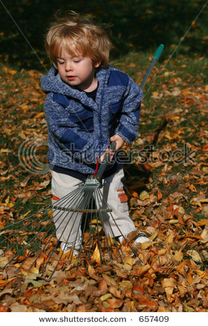 Little boy raking the leaves.
