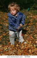 Little boy raking the leaves.