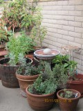 Easy Steps to Design a Container Garden on a Patio or Balcony