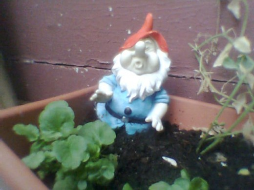 There's no good you trying to look innocent! I gnome it was you! Photo Copyright Nell Rose
