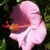 yoginijoy profile image