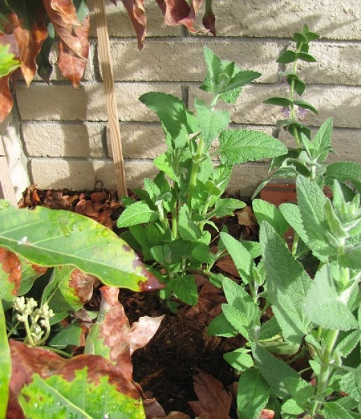 Your patio or balcony's sun exposure will determine what plants you can use in your container garden.