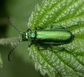 A Melancholy Bug - Unusual Insects