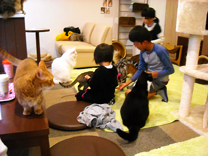 Children interact with some frisky felines. Cat cafes enforce strict rules to maintain the happiness of their residents.