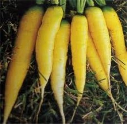 The yellow colored carrots.
