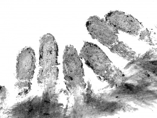 Photo take by Stephen Davies