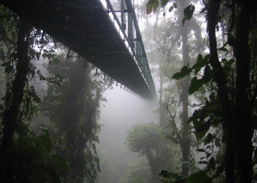 A hanging bridge, similar to those seen in the Monteverde cloud forest reserve.