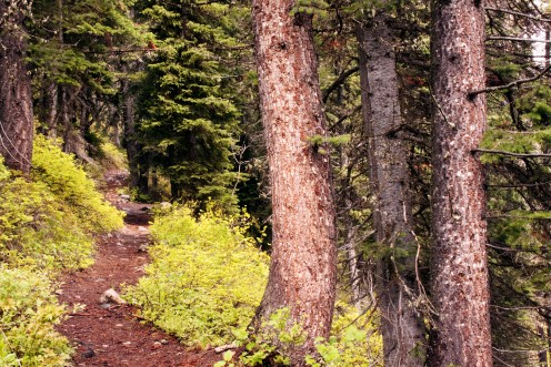 Trail Leading To? Grand Teton National Park, Wyoming