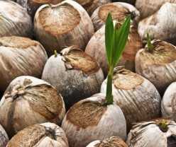 Seven Easy Ways To Add More Coconut Oil Into Your Diet To Gain The Health Benefits  And Ketones