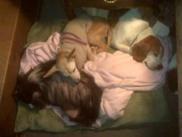 3 unwanted ones! Sally, Esmeralda & 'Beagles' aka Zora.